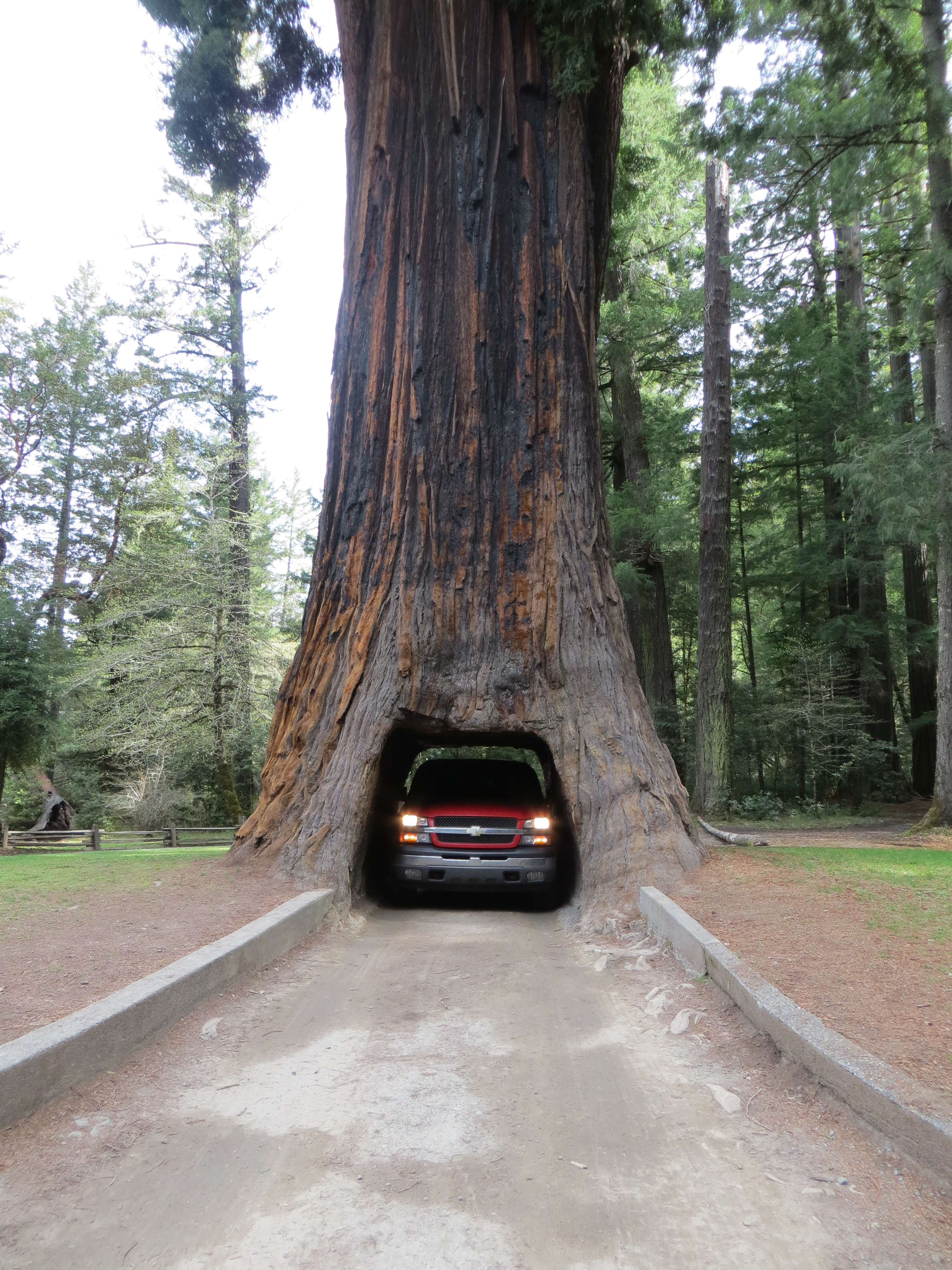 Chandelier drive thru tree smoking brakes sizing things up arubaitofo Images