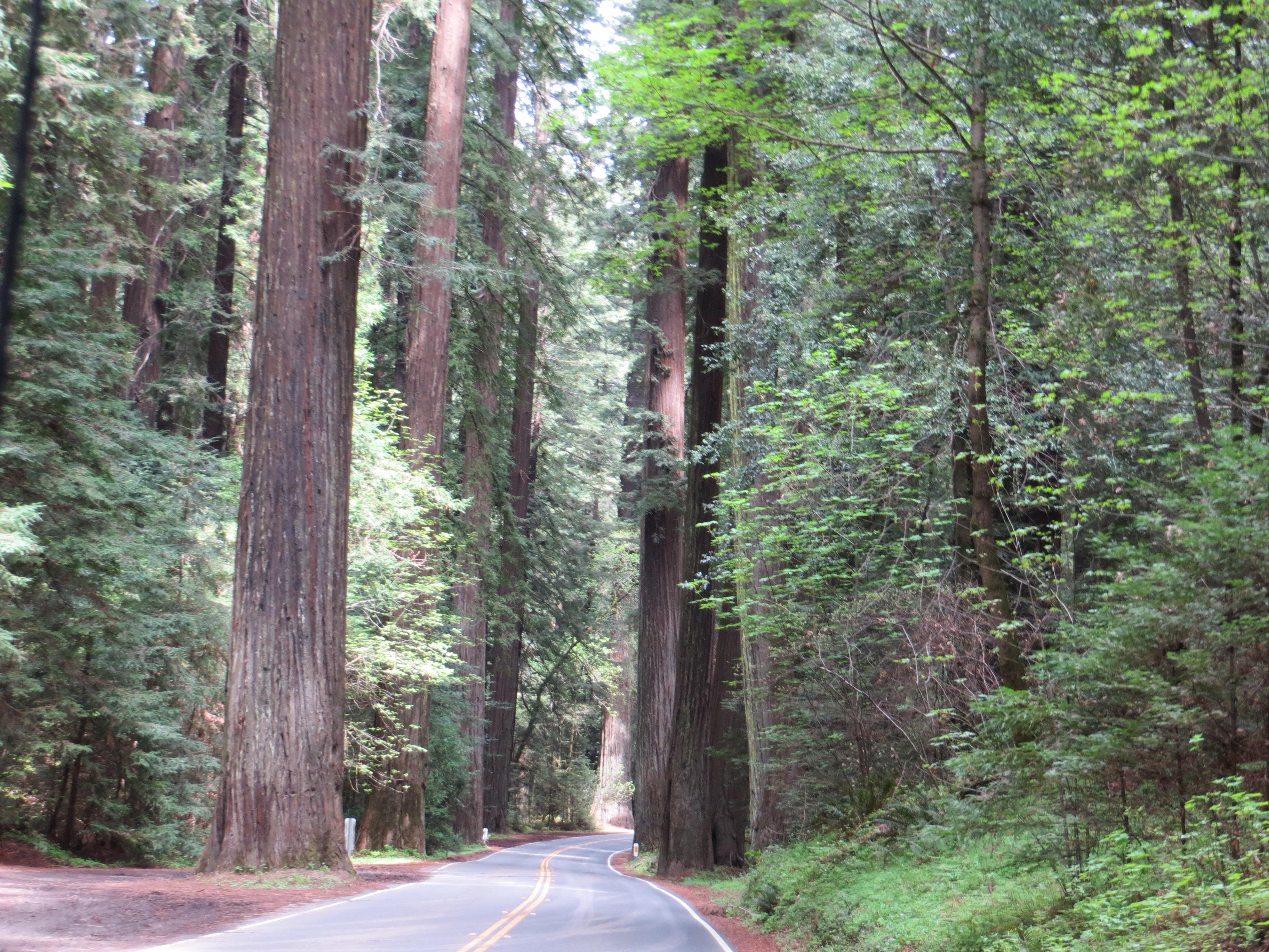 Chandelier drive thru tree smoking brakes avenue of the giants arubaitofo Images